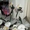 Wedding Weekend 2006 - 7